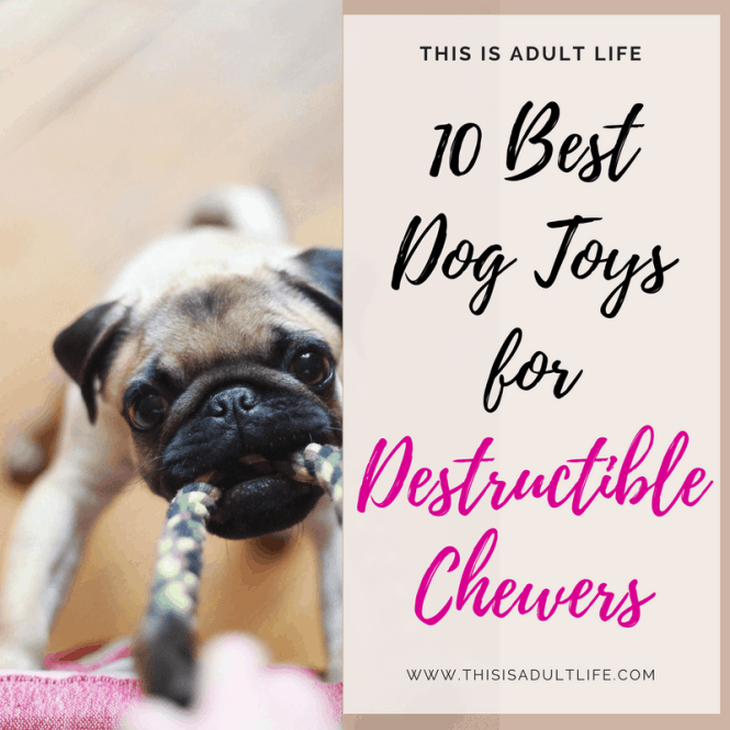 Best Dog Toys for Destructible Chewers