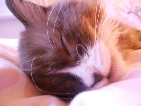 Muffin Sleeping