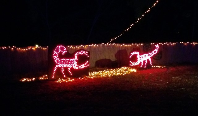 Christmas Scorpions!