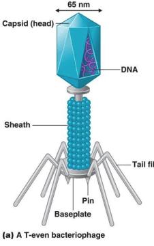 Crystal Virus