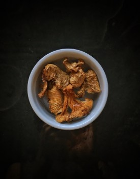 Chanterelle mushrooms (foraged in the woods of Colorado)