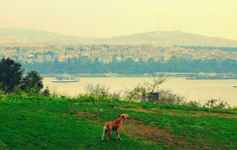 A melancholy dog howling to the sky, at the edge of Topkapi Palace land facing the Asian side of Istanbul.