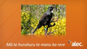 Maori LN images 014.004