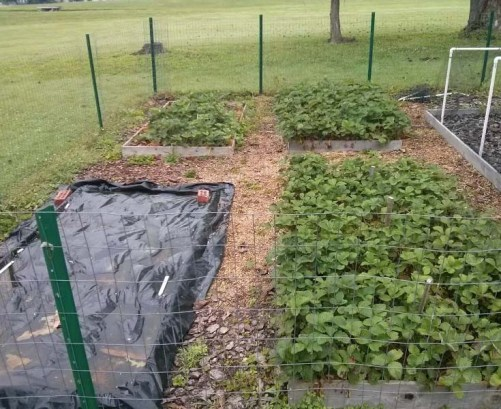 Feick Garden