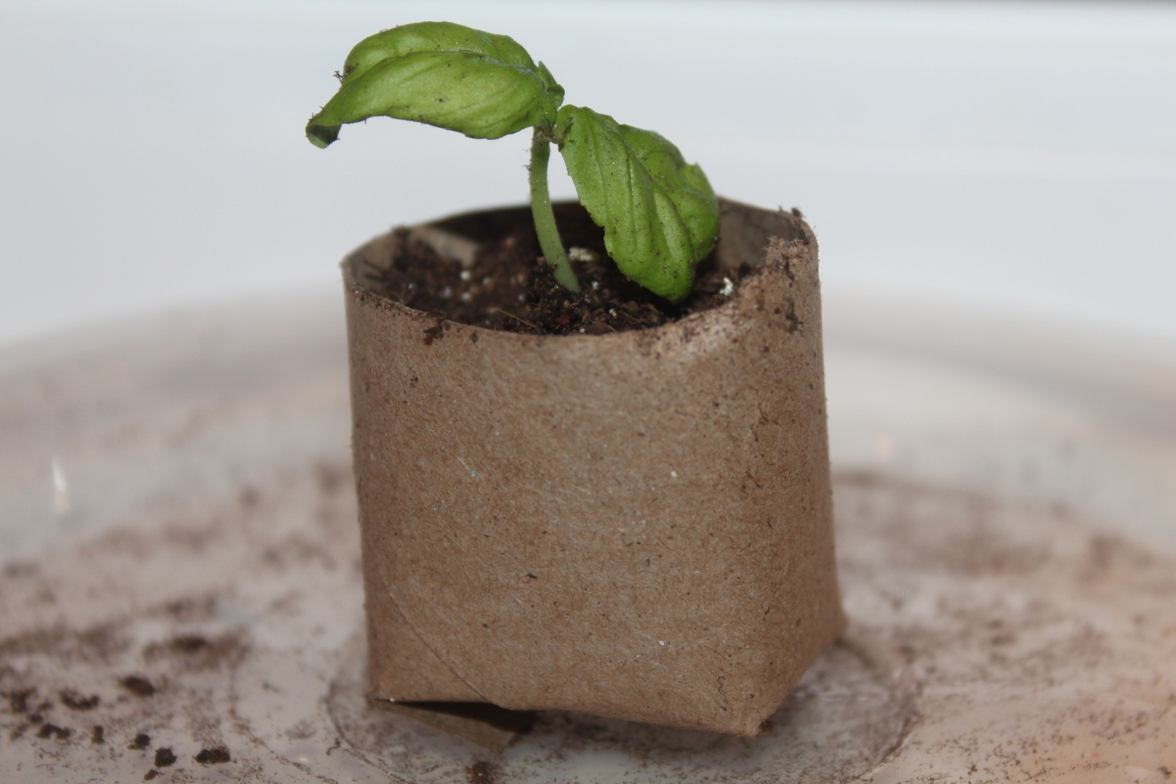 How To Make Homemade Seed Starting Containers Biodegradable, Earth Friendly, And
