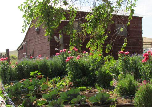 happy valley garden