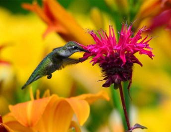 attracting butterflies, birds and bees