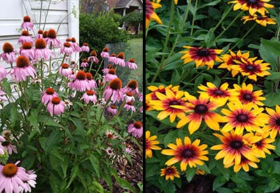 Tricia 39 S Home Grown Prairie Garden A Gorgeous Display Of Native Color