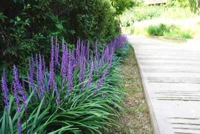 Short Ornamental Grasses 4 ornamental grass varieties to add low maintenance style to your yard ornamental grass varieties workwithnaturefo