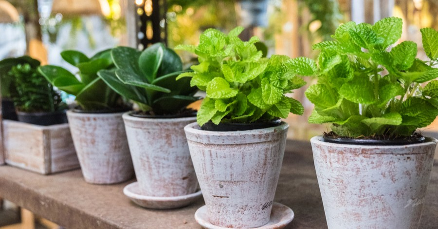 4 Easy-Grow Potted Patio Herbs To Grow For The Kitchen!