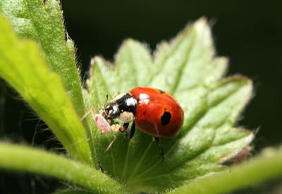 control aphids