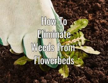 eliminate weeds