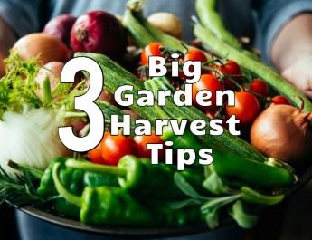 Harvesting Vegetables – 3 Keys To Get Peak Production From Your Garden!