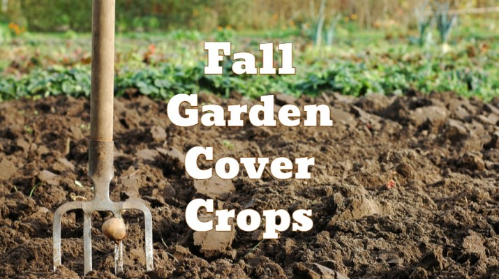 garden cover crop