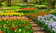 Planting Fall Bulbs – How To Create Gorgeous Spring Color!