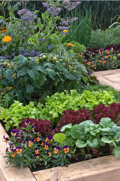 Wintertime Vegetable Garden Planning How To Plan For
