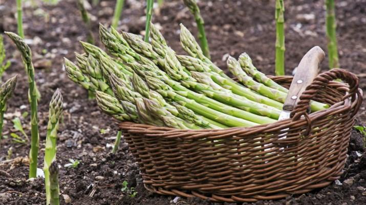 grow asparagus