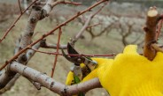 How To Prune Fruit Trees In The Winter – 4 Simple Steps To Success