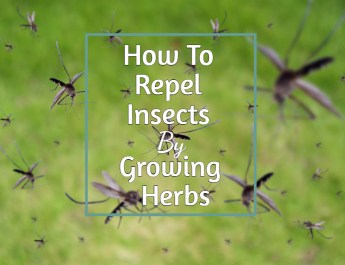 repel insects