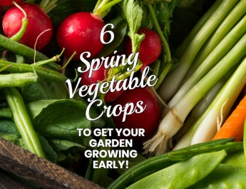 6 Spring Vegetable Crops To Get Your Garden Growing Early!