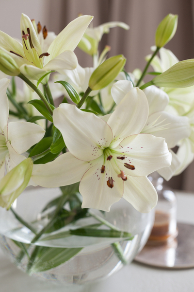 The Easter lily is one of the most popular potted plants around.
