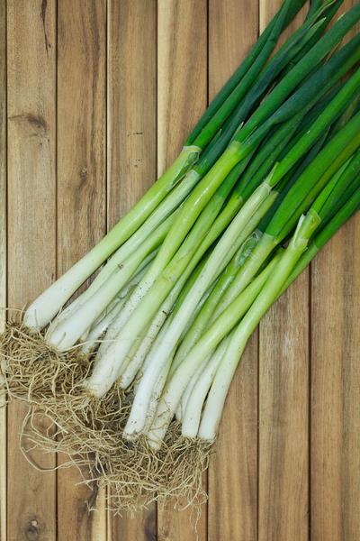 spring onion planting
