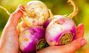 Growing Turnips From Seed  – How To Plant, Maintain and Harvest Turnips