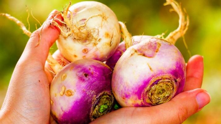 growing turnips