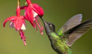 5 Beautiful Plants To Attract Hummingbirds To Your Patio & Landscape