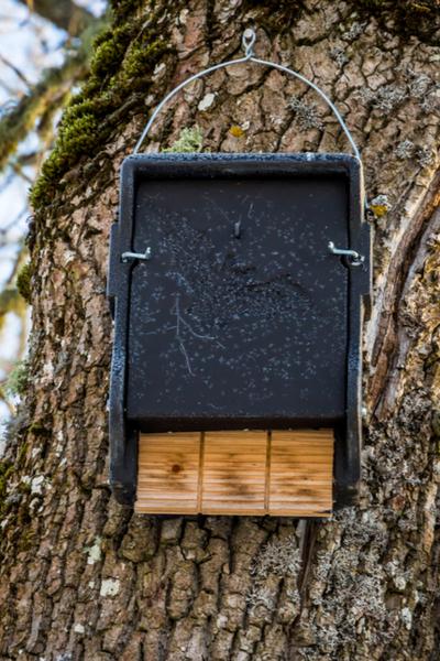 bat house on a tree