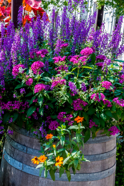 fertilize hanging baskets and container plants