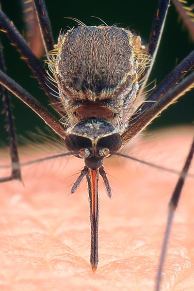 eliminate mosquitoes