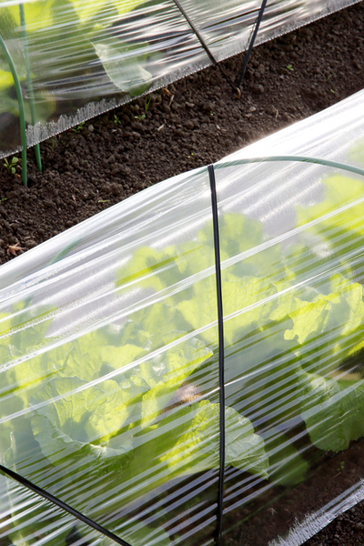 using row covers in the garden