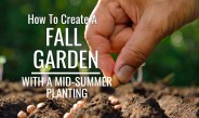 How To Create A Fall Vegetable Garden With A Mid-Summer Planting