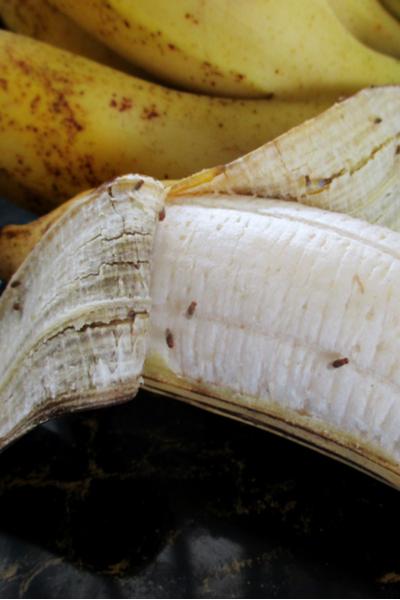 Eliminating Fruit Flies - How To Get Rid Of Fruit Flies In