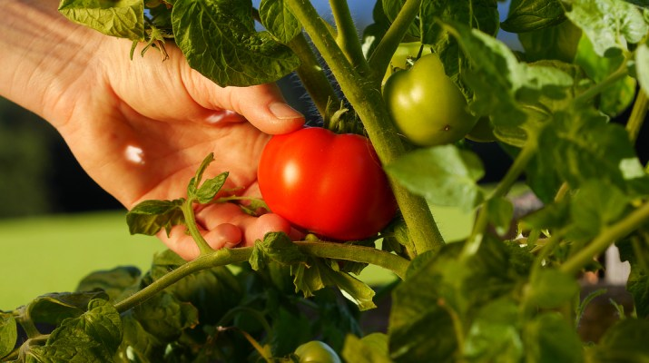 harvest a garden