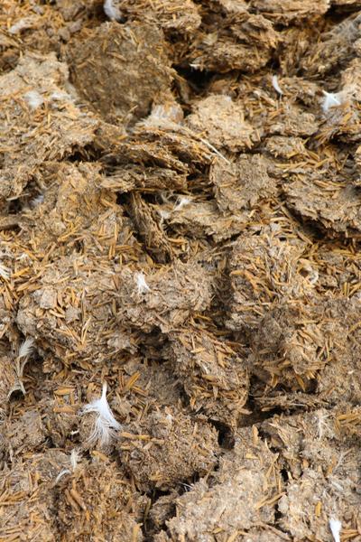 aged chicken manure