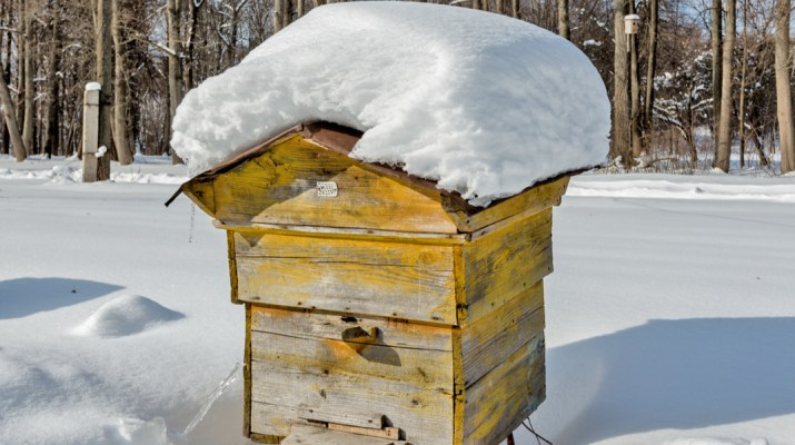 honeybees prepare for winter