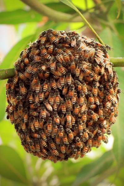 cluster - swarm