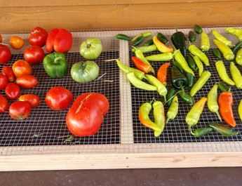 harvest rack