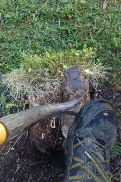 splitting the fern