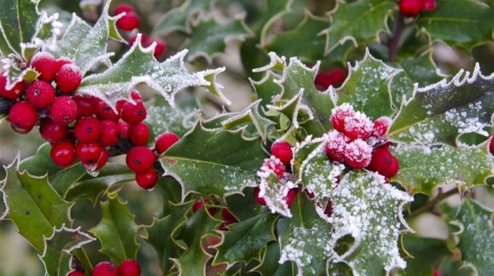 winter interest in the landscape