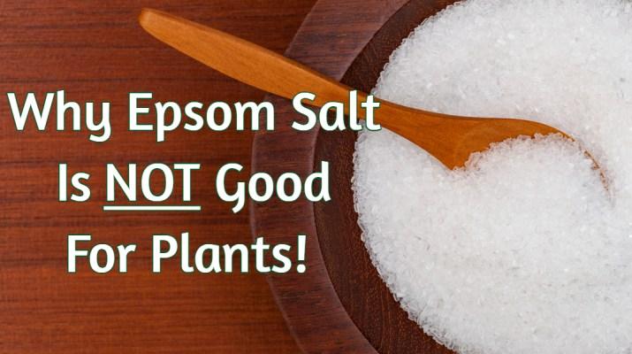 epsom salt on plants