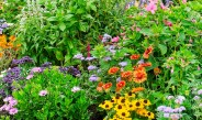 How To Eliminate Weeds From Your Flowerbeds For Good This Year!