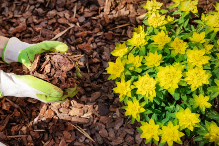 keeping weeds out of flowerbeds with mulch