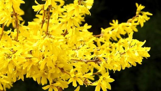 Spring in Mystic