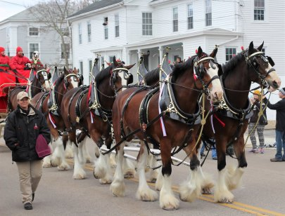 clydesdales-in-mystic2