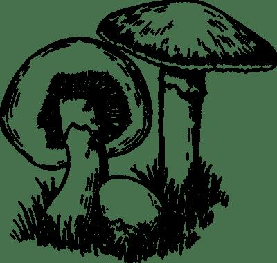 Wild Mushroom Festival Mystic