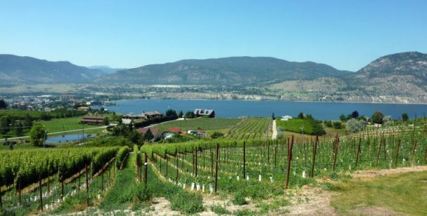 View of Okanagan winery