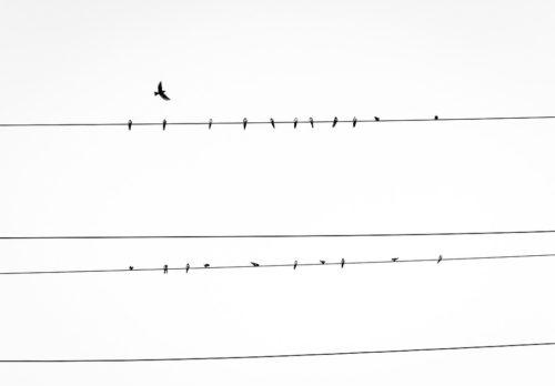 birds on overhead electric line